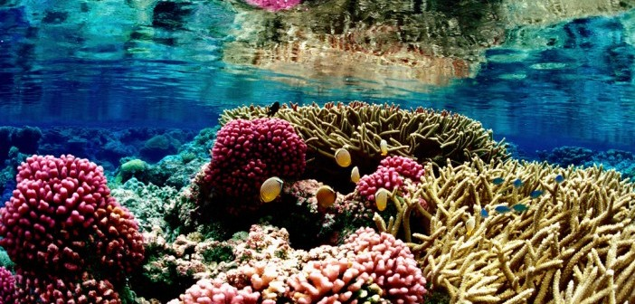 coral reef holland america
