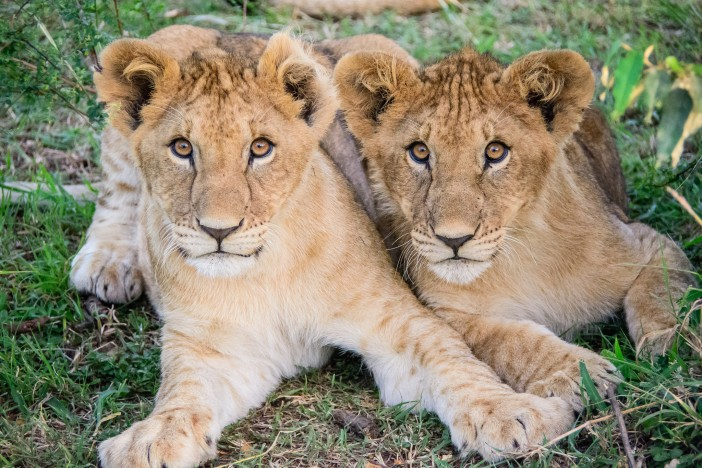Perfect Cruises for Animal Lovers