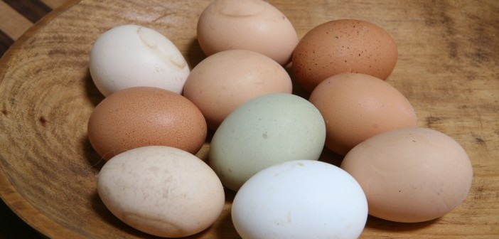 carnival cage free chicken eggs