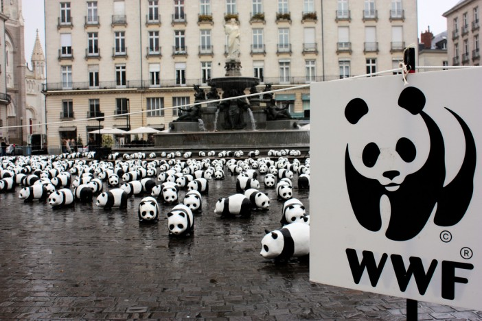 Royal Caribbean Goes Green with WWF
