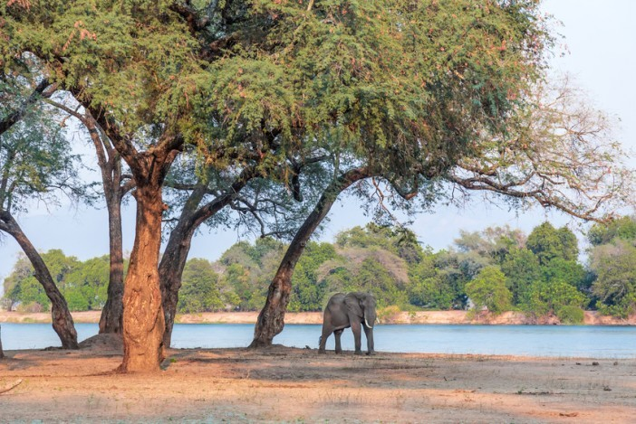 mana pools africa travel guide