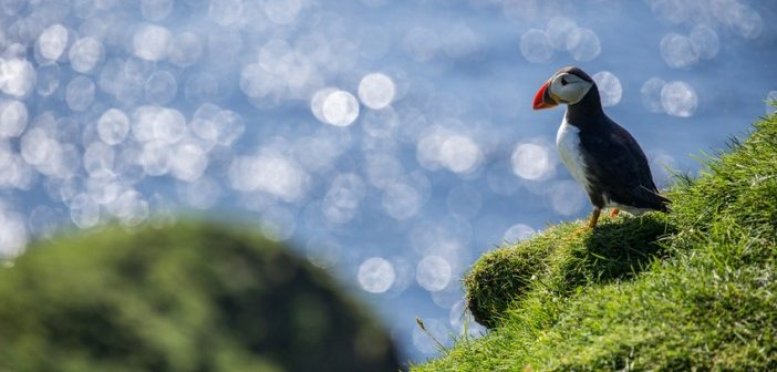 birdwatching and ornithology on the british coastline
