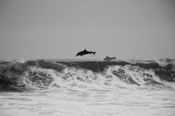 dolphin-unsplash