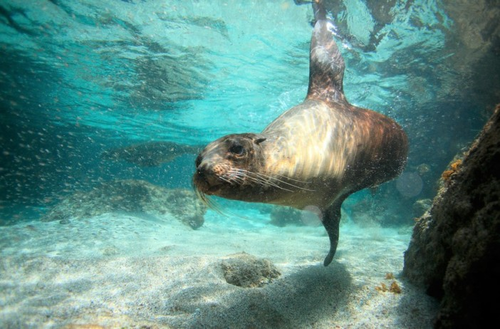 Where To Spot The Galapagos Spectacular Endemic Wildlife Cruise1st Blog