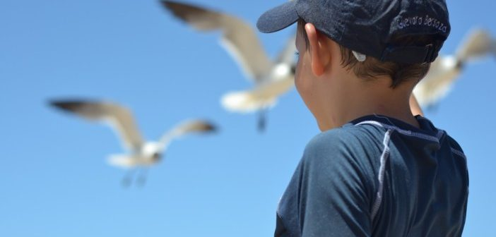 Little boy pointing to seagulls taking flight