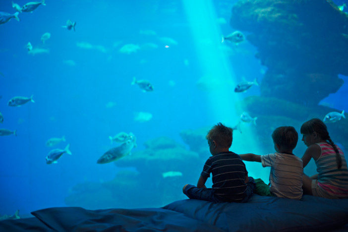 kids in an aquarium