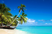 Island beach with palm trees